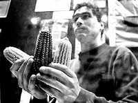 Presentación de video de Greenpeace en el que se muestra maíz transgénico, en imagen de archivo