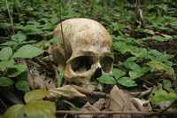 Entre la hierba se encontró el cráneo que sería el de uno de los indígenas desaparecidos por una disputa de tierras en Chiapas