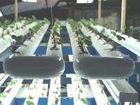 La intención de este tipo de tecnologías es el uso de materiales más económicos, para ponerlos a disposición de los productores y facilitar su transferencia. La imagen, captada en el CICESE