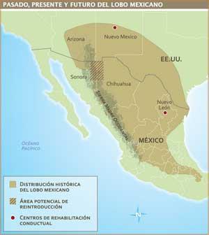 """Mapa """"Pasado, presente y futuro del lobo mexicano"""""""