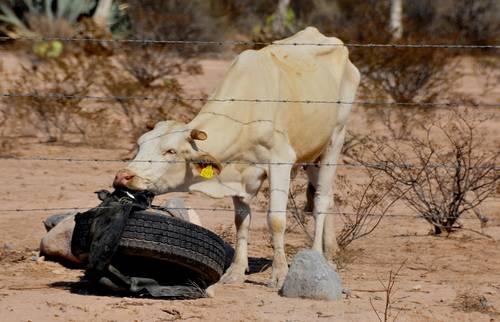 En Tamaulipas la sequía provoca pérdida de más de 90 mil hectáreas de cultivos