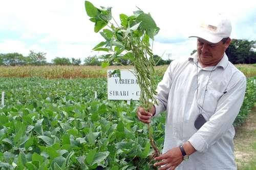 ¡¡Indígenas mexicanos ganando una batalla al gigante Monsanto!!