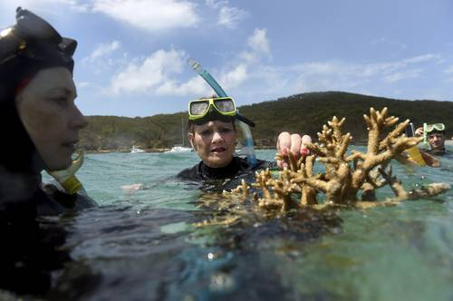 La Gran Barrera de Coral sufrió la mayor muerte masiva jamás vista