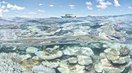En 30 años el mundo perderá sus arrecifes de coral, alertan expertos