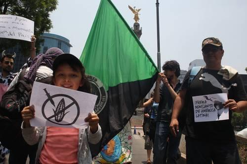 Protestan ambientalistas contra la siembra de maíz transgénico en México