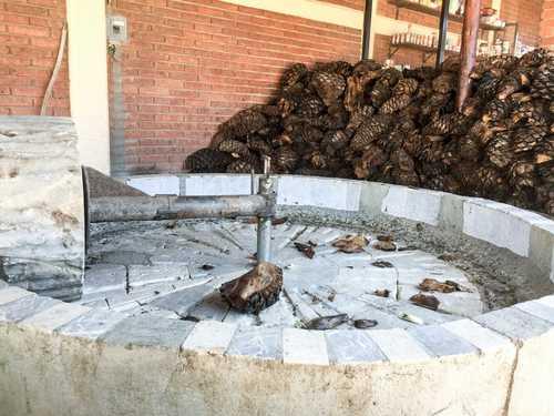 Piden no extender zona mezcalera a Aguascalientes, Edomex y Morelos