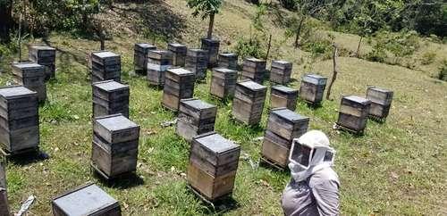 Productores de Oaxaca subsisten gracias a la apicultura itinerante