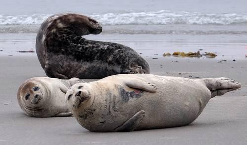 En riesgo, 17% de animales marinos si las emisiones de CO2 siguen al ritmo actual