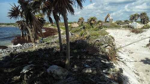 Denuncia contra Grupo Posadas por atentar contra tortugas en la playa de Chemuyil