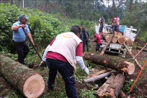 Decomisa Medio Ambiente un camión con 4.8 metros cúbicos de madera