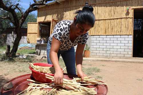 Elaboran zapotecos y empresaria de EU popotes con carrizo en Oaxaca
