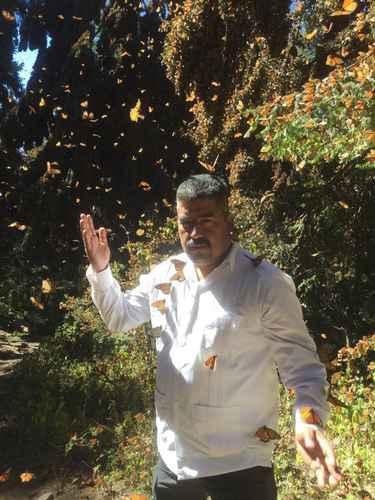 Desaparece defensor de santuario de la mariposa monarca en Michoacán