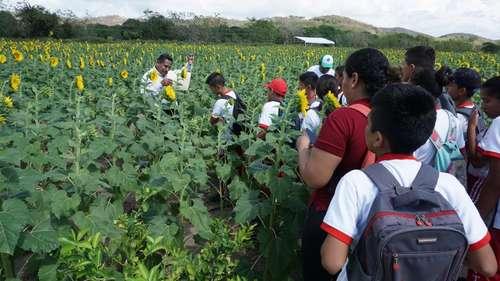 El santuario de girasoles más grande de Oaxaca, refugio para las abejas<br>