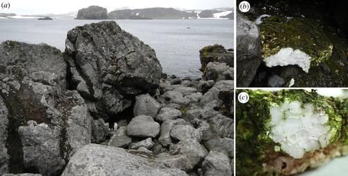 Encuentran microplástico en entraña de artrópodo de lugar recóndito de la Antártida