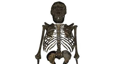El Homo erectus era achaparrado y robusto, no esbelto y estilizado, según nueva investigación