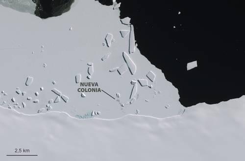 La Antártida tiene casi 20 % más colonias de pingüinos emperador de lo que se pensaba