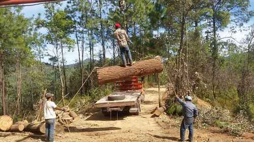Criminales roban agua, minerales y madera, acusan campesinos de la sierra de Guerrero