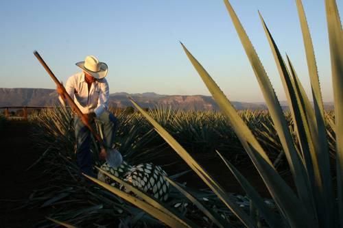 Acuerdan México y GB proteger bebidas espirituosas