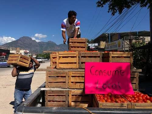 En el poblado de El Ocotito, municipio de Chilpancingo, Guerrero, productores de jitomate remataron hasta en 80 pesos la caja debido a las bajas ventas, cuando en años pasados llegaron a venderla hasta en 500 pesos.