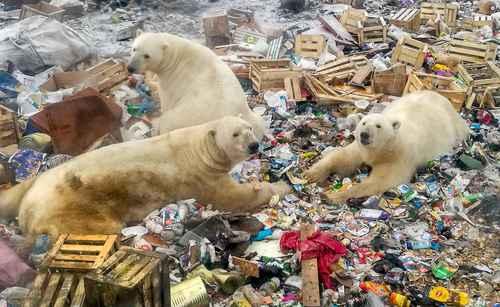 Sombrío panorama para la supervivencia de todas las especies, incluida la nuestra