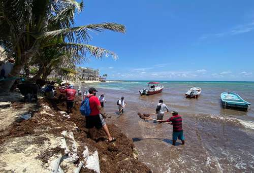 Cuadrillas de trabajadores de limpieza retiran grandes cantidades de sargazo que arribaron en días recientes a la zona conocida como El Recodo, en Playa del Carmen, Quintana Roo.
