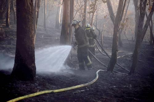 Bomberos, efectivos del Ejército Mexicano y personal de Protección Civil controlaron la tarde de ayer un incendio en la tercera sección del Bosque de Chapultepec que afectó 2.8 hectáreas de pastizales y arbustos.