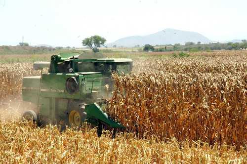 La sequía y mayor demanda disparan los precios del maíz