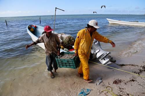 El sector camaronero deberá esperar un año para intentar recibir la certificación estadunidense y reanudar las exportaciones al vecino país del norte .