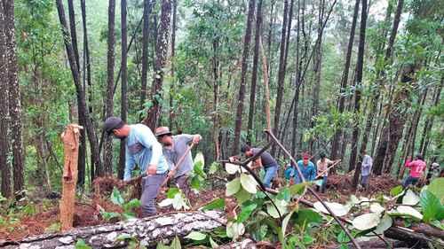 Campesinos del ejido El Cordón, en la sierra del municipio de Tecpan de Galeana, en la Costa Grande de Guerrero, siembran árboles frutales y cuidan bosques y animales en peligro de extinción, entre ellos el jaguar.