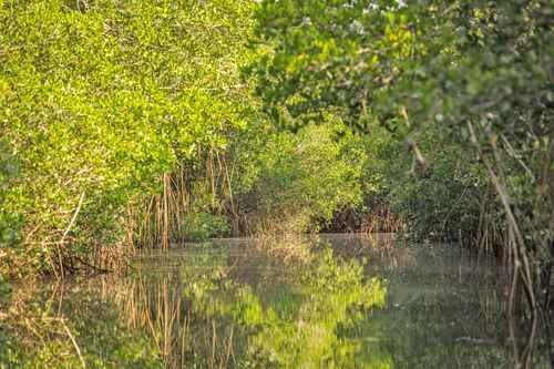 El ecosistema sólo crece y se mantiene en lagunas de costa, como ésta en Puerto Vallarta, Jalisco.